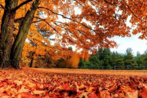 We offer fall cleanup services, including leaf blowing and removal.