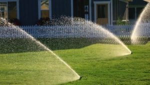 Sprinkler systems ensure even watering