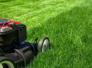 Let the pros handle your lawn care this summer.